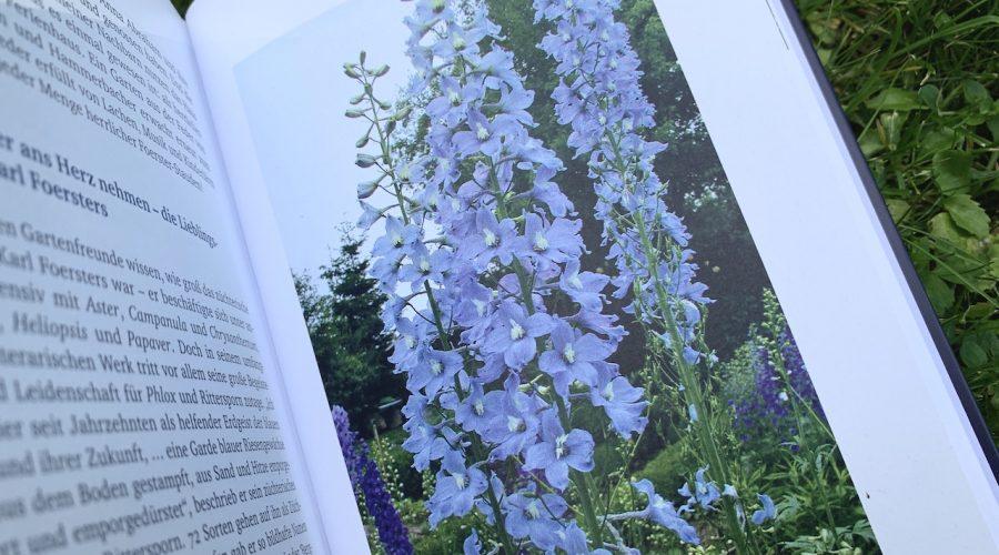 Ritterspornblüten im Buch